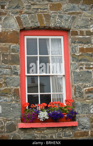 Sash window with flower box on sill outside house in the coastal resort of New Quay, Ceredigion, West Wales, UK - Stock Photo