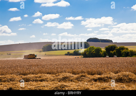 Haymaking in fields near Roundway Down, Wiltshire, England, UK - Stock Photo