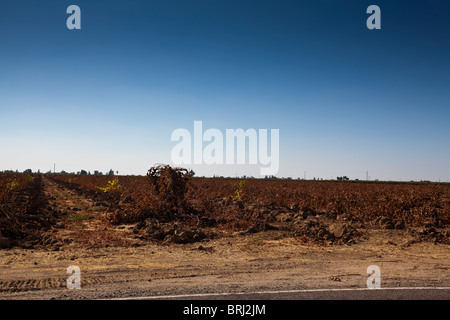 Vineyard where old vines have been torn out waiting for replanting near Lodi California in the California Central - Stock Photo
