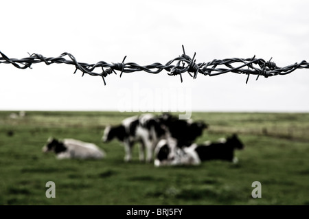 Black and white barbed wire Stock Photo: 309824335 - Alamy