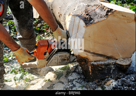 Log being cut with chainsaw - Stock Photo