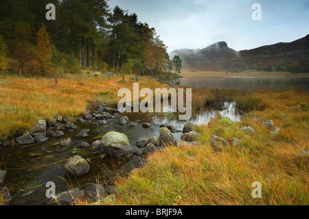 A misty Autumn morning along the shores of Blea Tarn in the Lake District of England - Stock Photo