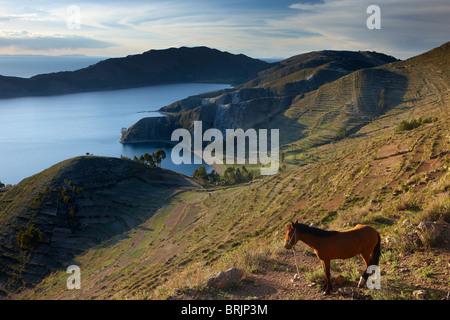 a horse on Isla del Sol, Lake Titicaca, Bolivia - Stock Photo