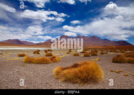 the remote region of high desert, altiplano and volcanoes near Tapaquilcha, Bolivia - Stock Photo