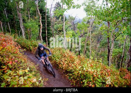 A mountain biker rides past fall colors on a trail near Salt Lake City, UT. - Stock Photo