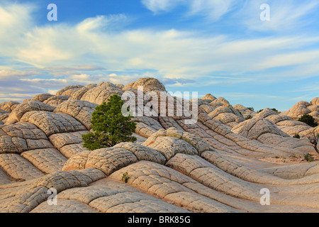 Rock formations in the White Pocket unit of the Vermilion Cliffs National Monument, Arizona - Stock Photo