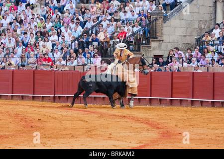 bull fighting scene in sevilla, spain - Stock Photo