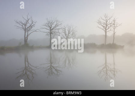 Misty morning on a fishing lake with dead trees, Morchard Road, Devon, England. - Stock Photo