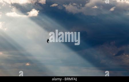 Sun shining through dark clouds and bird flying in sunbeam , Finland