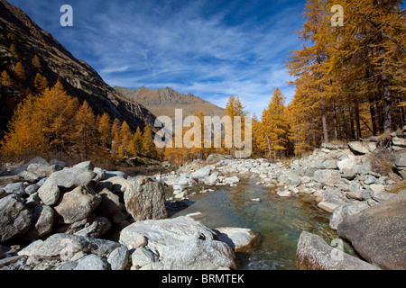 Landscape in Gran Paradiso National Park with larches in autumn colors. - Stock Photo