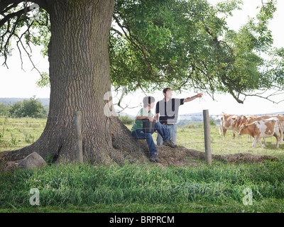 Farmer and son with Guernsey calves - Stock Photo