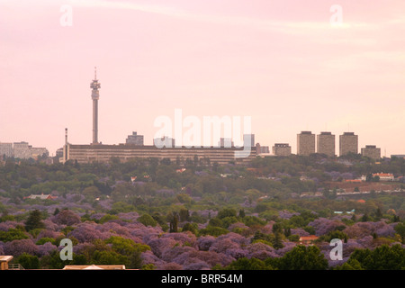 Johannesburg skyline and hillbrow tower stock photo 48115660 alamy johannesburg skyline with the hillbrow tower and a view over the suburbs with lots of jacaranda thecheapjerseys Image collections