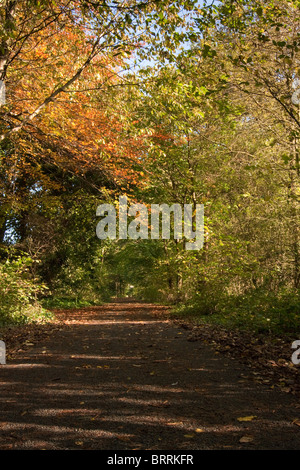 Long footpath stretching away into the distance through an avenue of Autumn colored trees.Autumn Footpath - Stock Photo