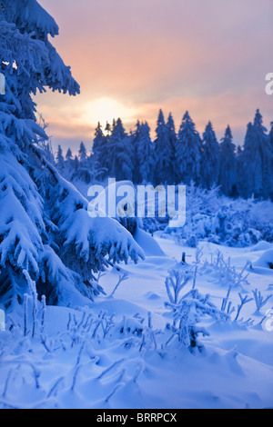 winter forest in Harz mountains, Germany - Stock Photo