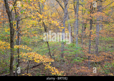 autumn trees in Paint Creek Unit, Yellow River State Forest, Allamakee County, Iowa - Stock Photo