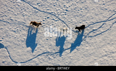 Aerial picture, Homberg paddock at the DGB Hattingen school, horses in snow, Ruhr area, North Rhine-Westphalia, - Stock Photo