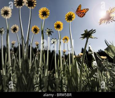 ENVIRONMENTAL CONCEPT:  Spring Meadow (Germany/ Bavaria) - Stock Photo
