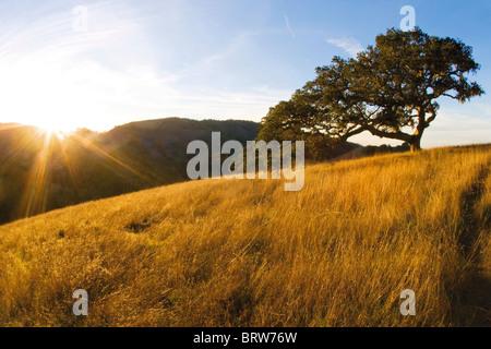 Coast live oak and grassland - Santa Lucia Preserve, CA - Stock Photo