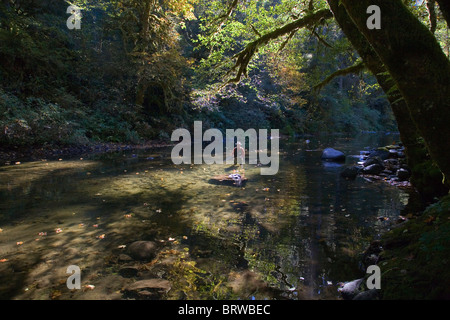 A fisherman casting for trout in a small stream, the South Santium River, in the Oregon Cascade Mountains. - Stock Photo