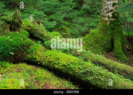 Moss on Fallen Tree - Stock Photo