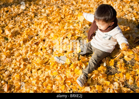 Little Boy Sitting on Fallen Autumnal Leaves - Stock Photo