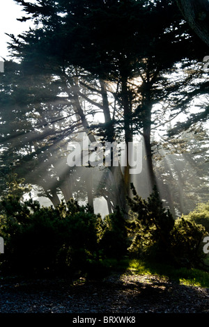 Misty afternoon sun shines through trees in San Francisco's Golden Gate Park. - Stock Photo