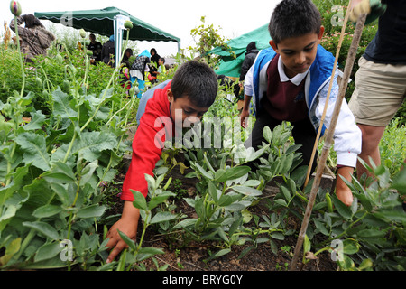 children visit a local inner city allotment to learn about gardening and the environment, Bradford UK - Stock Photo