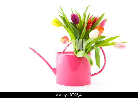 spring tulips in many colors at pink watering can - Stock Photo