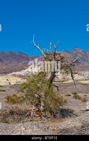 Dead, dried up tree in Death Valley National Park, California, USA