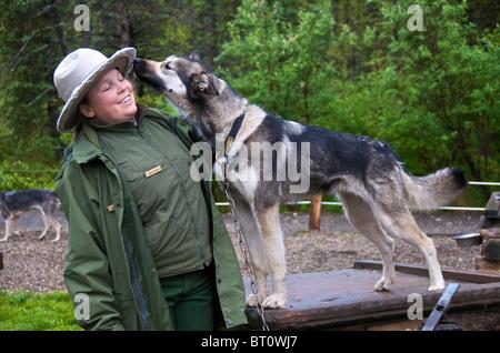 Ranger with husky Denali National Park Alaska USA - Stock Photo
