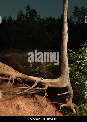 Artistic photo of a dead tree with dried roots - Stock Photo