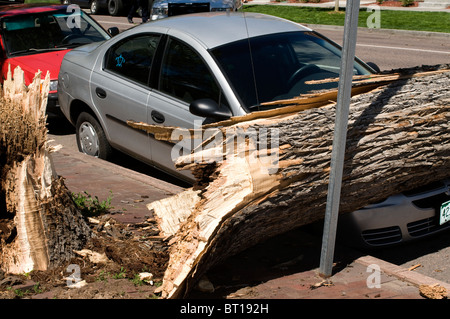 Huge tree that fell on hood of car during strong wind storm - Stock Photo