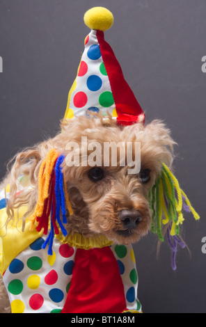 Dog Clown - Stock Photo