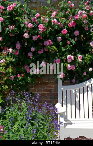 Rambling roses in an English garden in June. - Stock Photo
