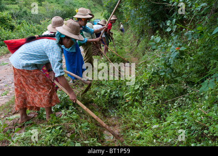group of village women maintaining road side gaps. Shan State. Myanmar - Stock Photo