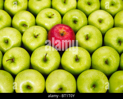 red apple standing out from bunch of green apples - Stock Photo