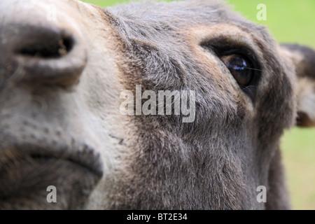 The donkey - Stock Photo