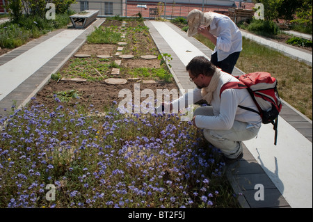 Paris, France, Couple Visiting Rooftop Community Garden on New Low-income Public Housing Building, Man Taking Photos - Stock Photo