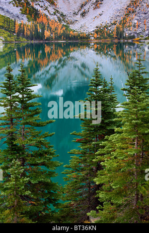Larch trees and firs at Colchuck Lake in the Alpine Lakes wilderness of Washington state - Stock Photo