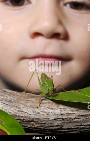 Four year old boy looks closely at a lesser angle-winged katydid on a branch. - Stock Photo