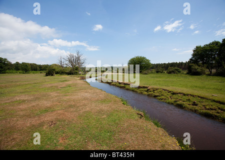A view along Ober Water in the New Forest. A perfect habitat for Damselflies and Dragonflies. - Stock Photo