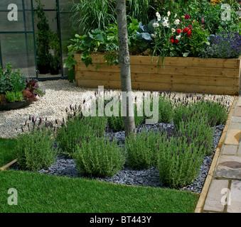 A Lavender border in an urban garden - Stock Photo