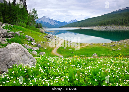 Wildflowers on the shore of Medicine Lake in Jasper National Park, Canada - Stock Photo