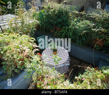 Looking down on seating area on decked roof terrace surrounded with shrubs, perennials and bamboo in pots. - Stock Photo