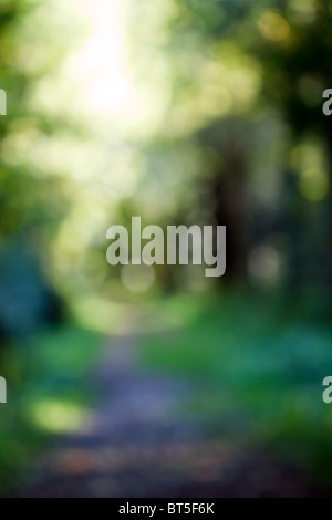 Out of Focus Forest Path. Bokeh Background for your object or Portrait - Stock Photo