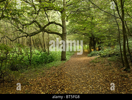 A path through woodland in Thorndon Park in Essex.  Photo by Gordon Scammell - Stock Photo