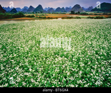 Wildflower Field, Karst Landscape near Yangshuo Guangxi, Along Li River, People's Republic of China - Stock Photo