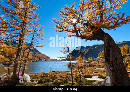 Alpine larch trees and Perfection Lake in The Enchantments, Alpine Lakes Wilderness, Washington. - Stock Photo