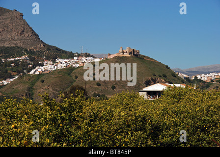Town and castle with lemon trees in the foreground, Alora, Malaga Province, Andalucia, Spain, Western Europe. - Stock Photo