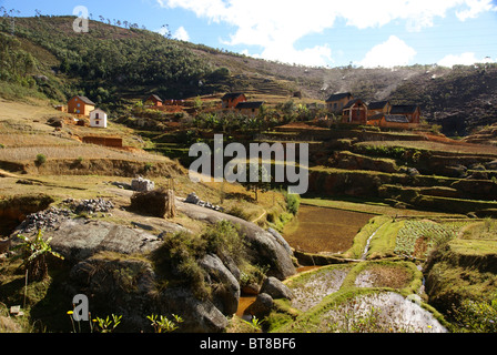 Madagascar, Rice fields - Stock Photo